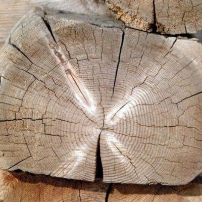 Suché dřevo